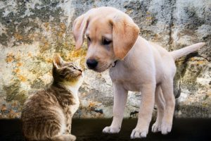 puppy and cat
